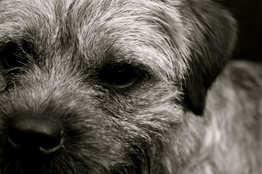 Algemene informatie hond