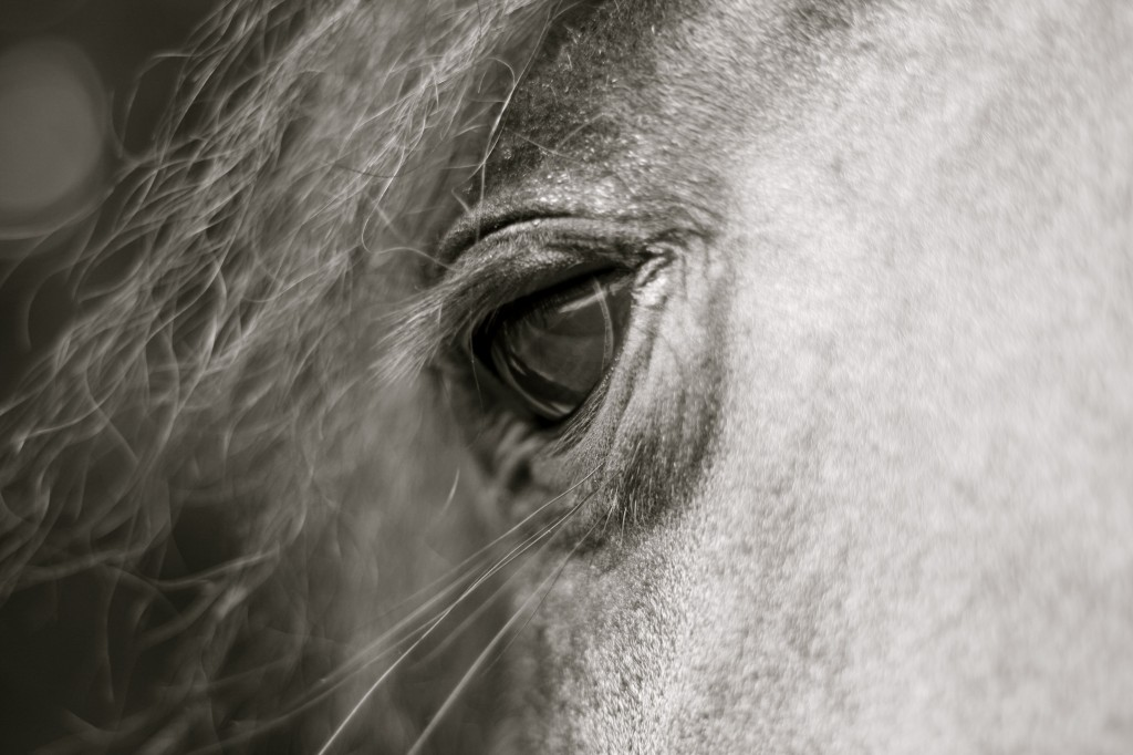 Algemene informatie paard