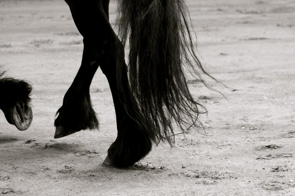 Behandeling paarden